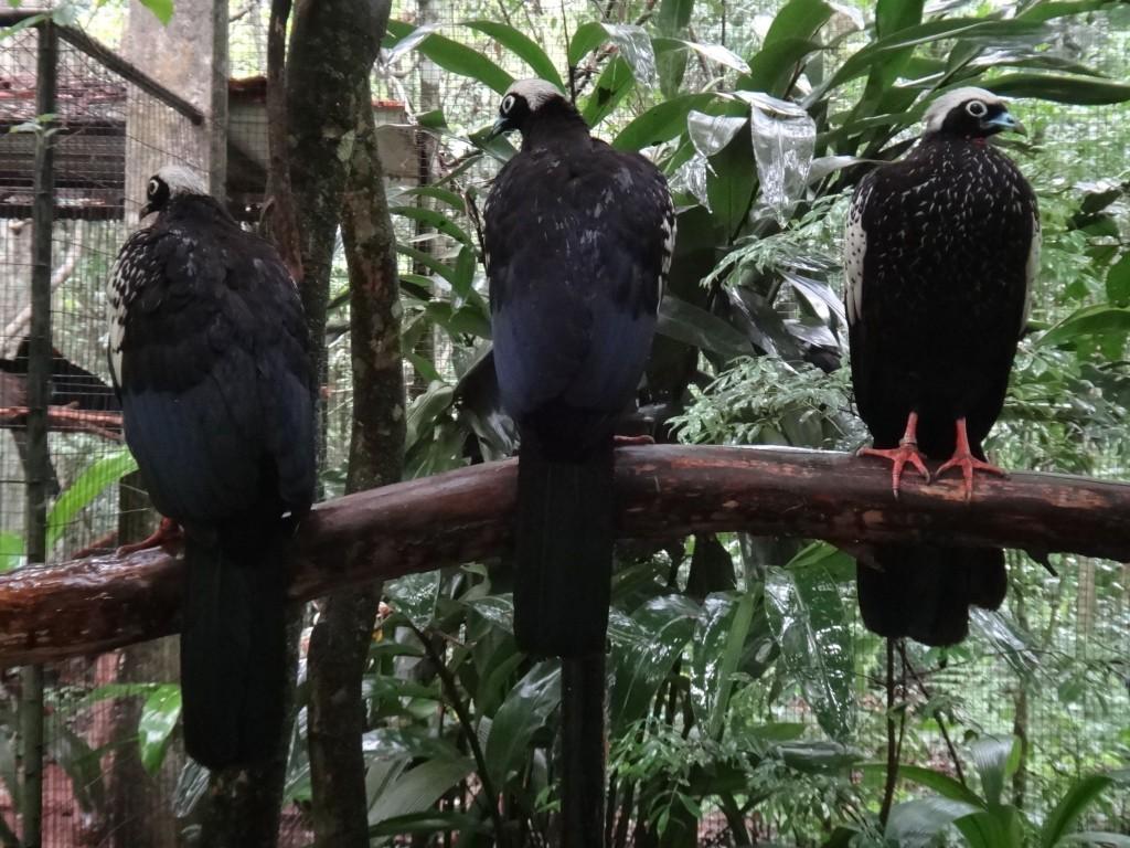 passaros foz do iguaçu parque das aves