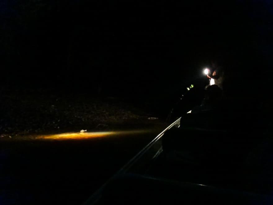 focagem floresta amazonica de noite